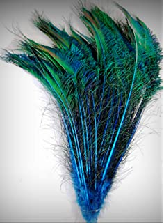 "25 Pcs PEACOCK SWORDS Natural Feathers 15/""-20/"" Craft//Pad//Decor//Costume//Hats//Art"