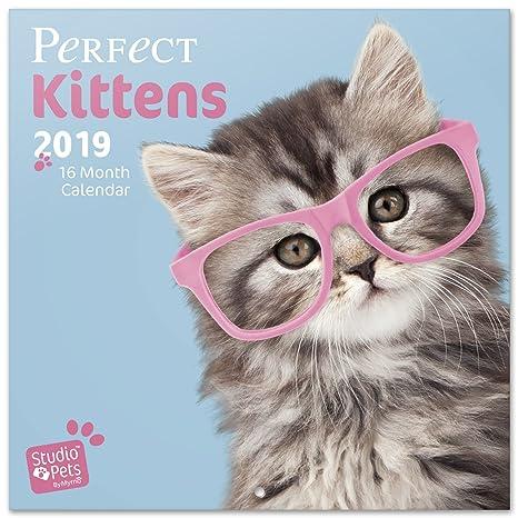 Grupo Erik Editores Studio Pets - Calendario con diseño gatos, 30 x 30 cm