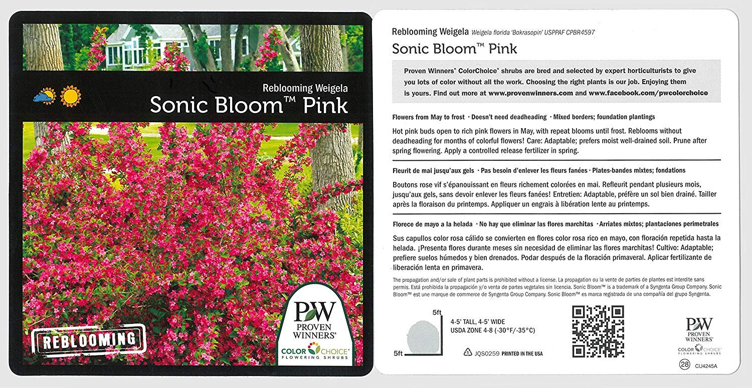 Proven Winners - Weigela Flordia Sonic Bloom Pink (Reblooming Weigela) Shrub, Pink Flowers, #3 - Size Container by Green Promise Farms (Image #6)