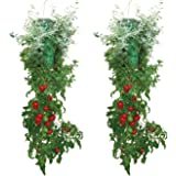 Allstar Innovations Topsy Turvy Deluxe- New & Improved Upside Down Tomato & Herb Planter - As Seen On TV