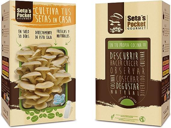 SETAS POCKET - Kit de SETAS AUTOCULTIVO - Cultivar setas en casa ...