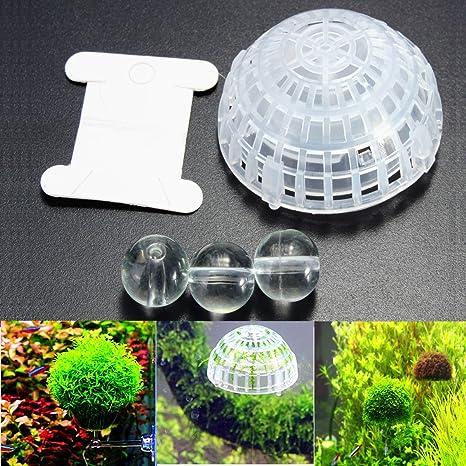 Moppi Acuario pecera musgo bola flotante plantas vivas cultivo