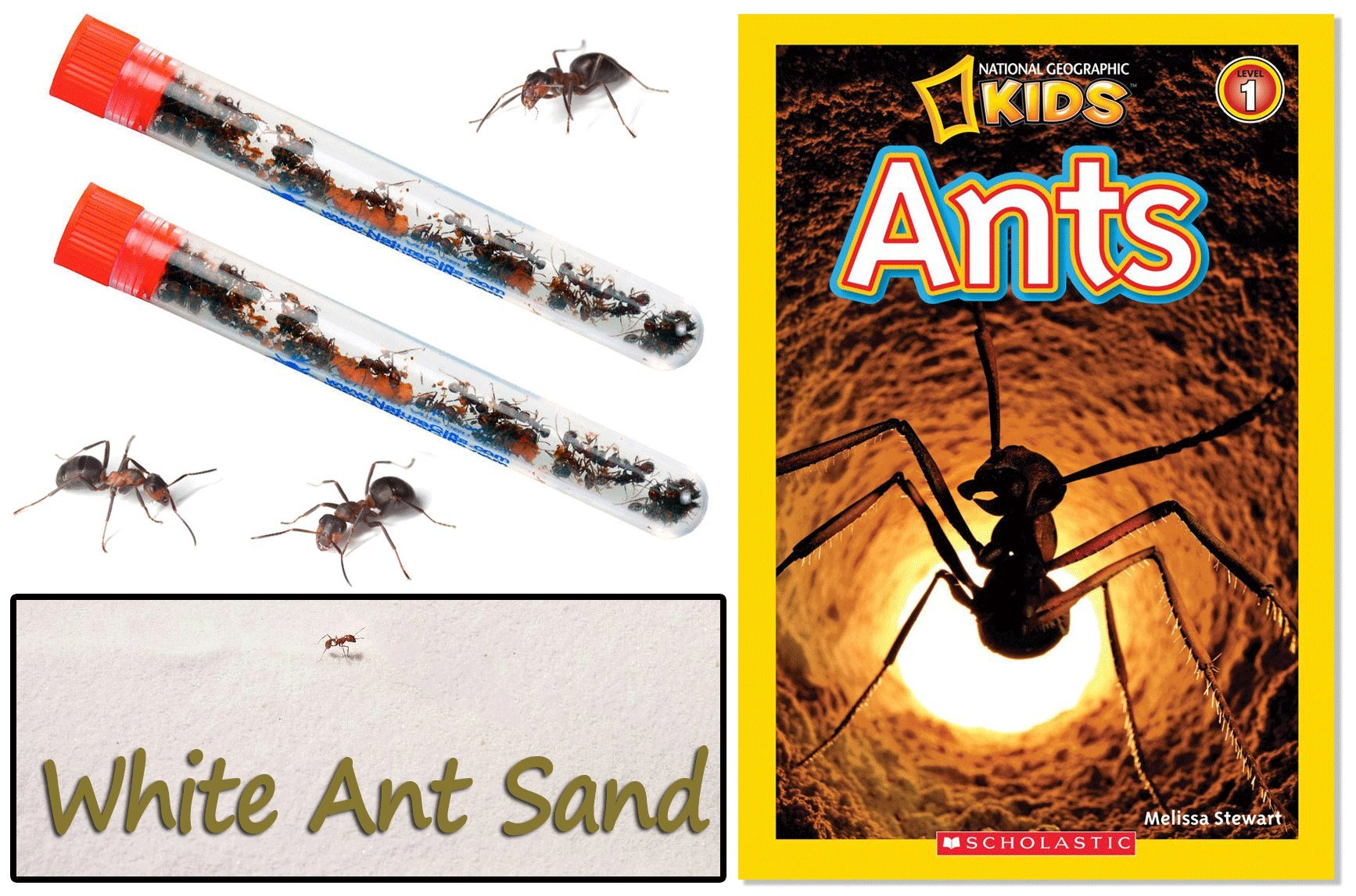 Nature Gift Store 2 Tubes Live Ant Farm Ants, Book and 10oz Ant Refill Sand-Bundle by Nature Gift Store