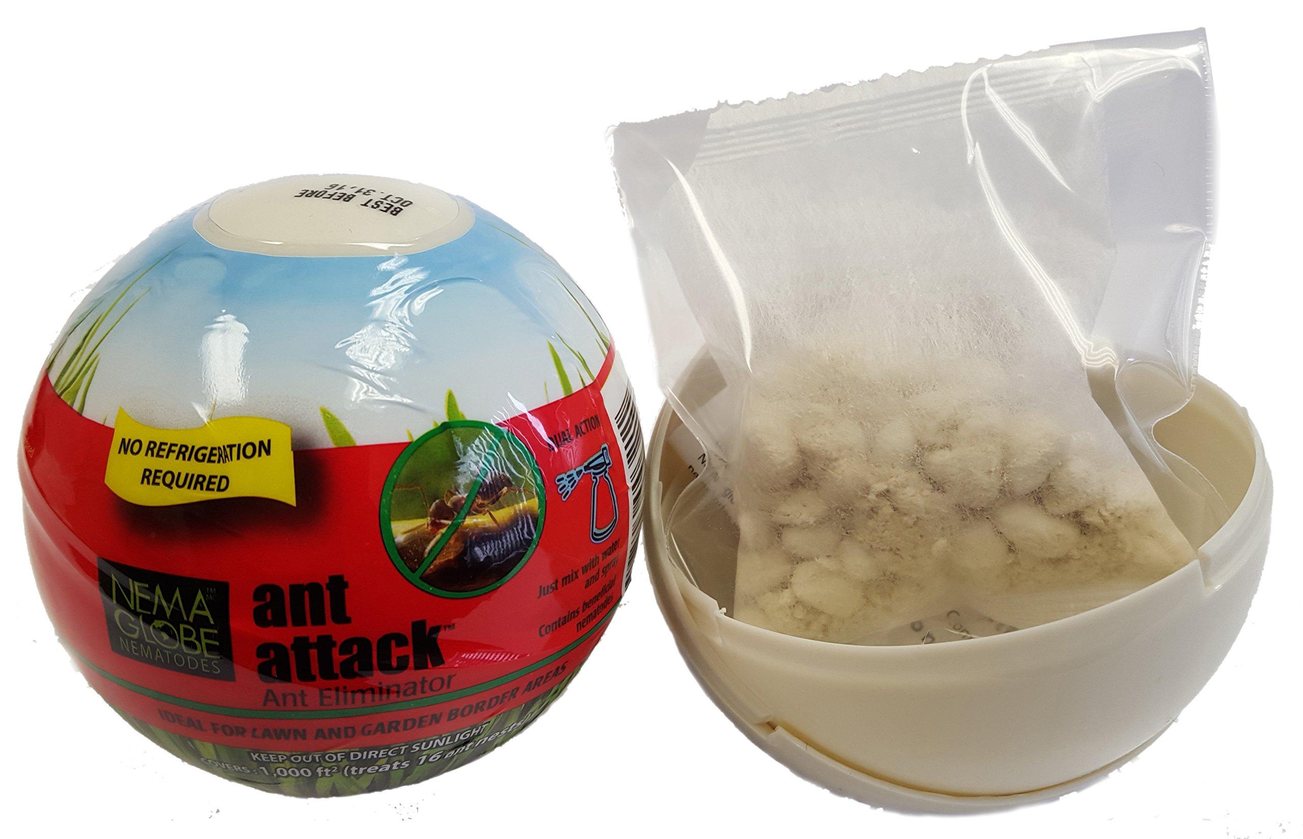 10 million Beneficial Nematodes (S.feltiae) - Nema Globe Ant Attack Tick and Pest Control New''No Refrigeration Required'' Formula by Nemaglobe (Image #2)