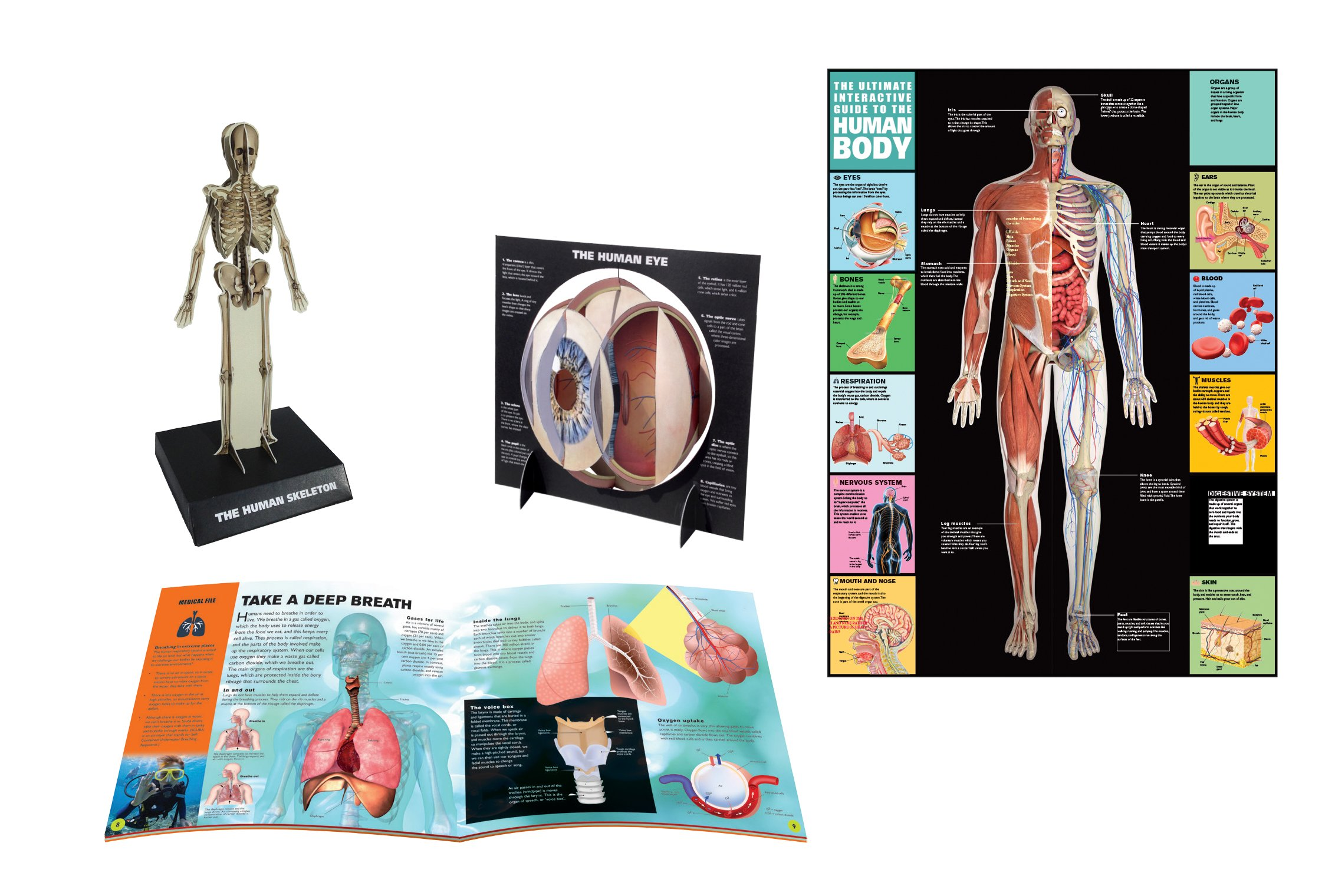 Ultimate guide: human body: the ultimate guide to how the body.