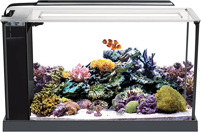 The Best 20 Gallon Desktop Aquarium