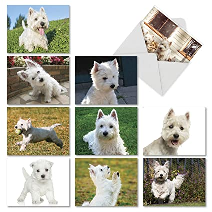 wonderful westies 10 boxed all occasion note cards with envelopes 4 x 5 - Dog Greeting Cards