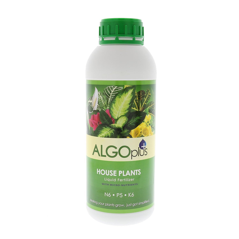 Amazon Com Algoplus House Plants Garden Outdoor