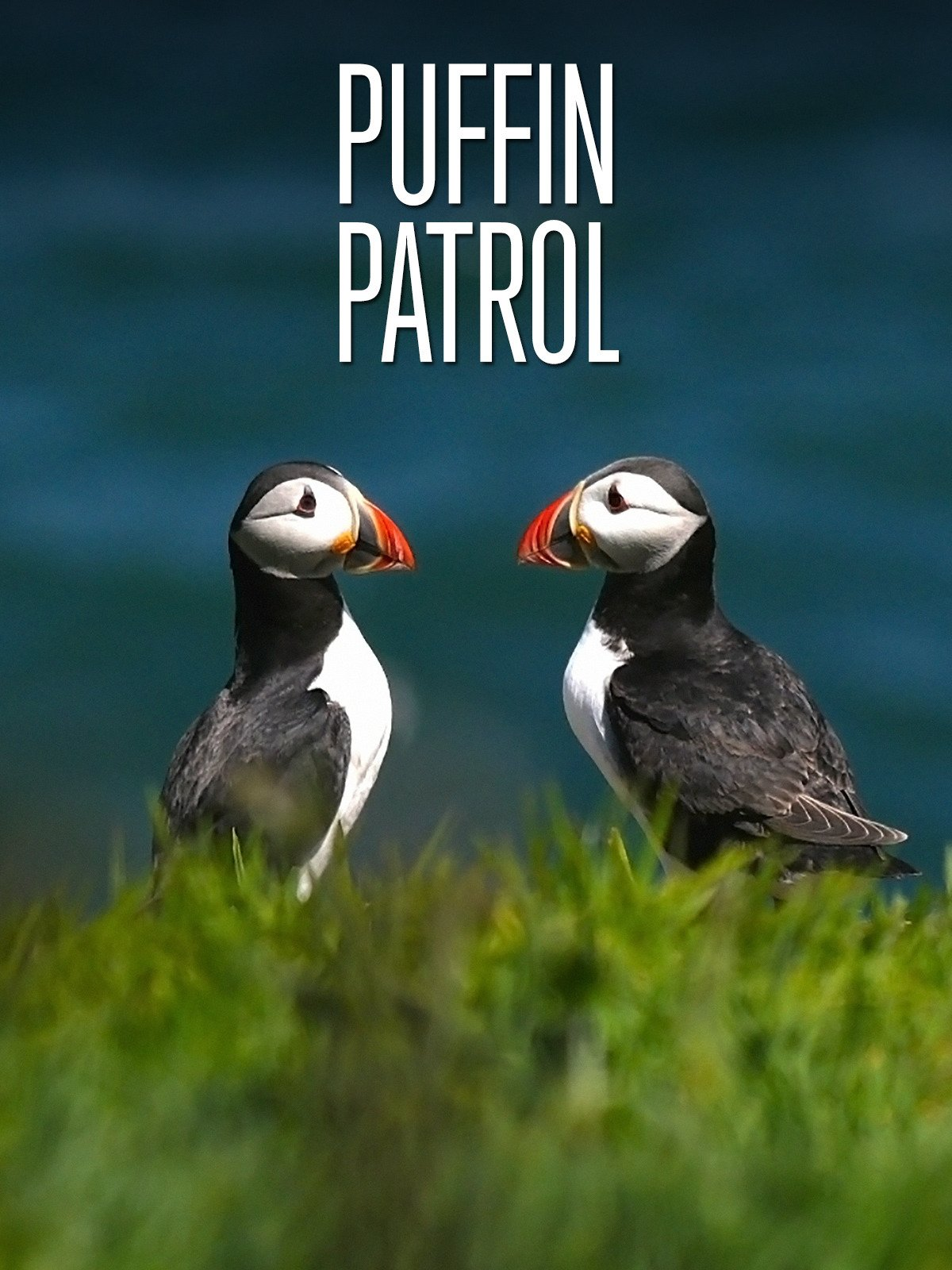 Amazon com: Watch Puffin Patrol | Prime Video