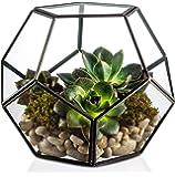 CINAGRO - Geometric Glass Terrarium, Eloquent Design, Plants, Succulents, Votive Candle Holder (Black)