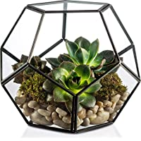 CINAGRO - Geometric Glass Terrarium, Eloquent Design, Plants, Succulents, Votive Candle Holder (Black)