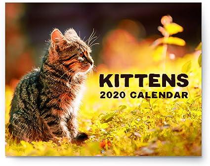 2019 - Calendario de pared para gatos (tamaño grande, 28 x 43 cm), diseño de gato con fotos sobre papel resistente, imágenes impresionantes de gatitos en el planificador oficial 2019: Amazon.es: Oficina y papelería