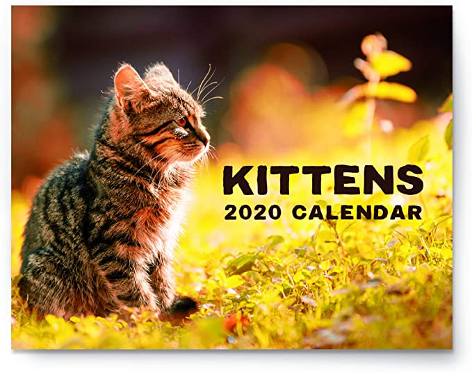 CATS PROTECTION Less than Half Price 2020 Kitten Calendar NEW