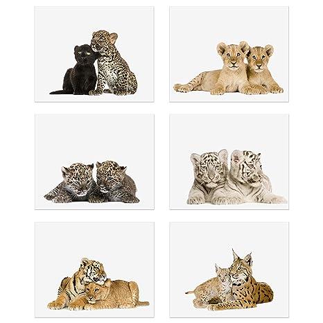 Crystal Big Cat Cubs Prints - Set of 6 (8x10) Adorable Baby Kitten Wall Art  Decor - Lion - Spotted Jaguar - Black Panther - Siberian Tiger - Bengal