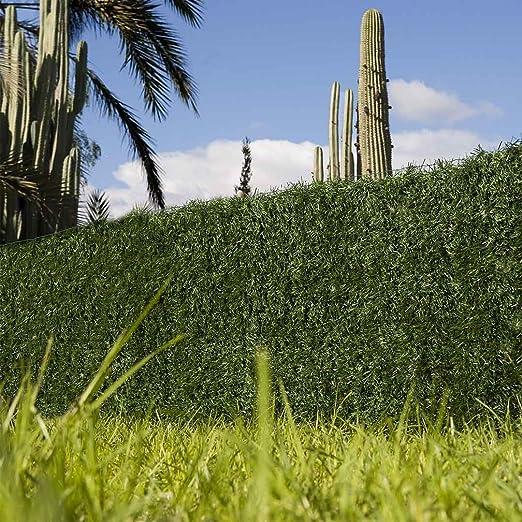 Catral 43020013 Seto Dense, Verde, 300x3x100 cm: Amazon.es: Jardín