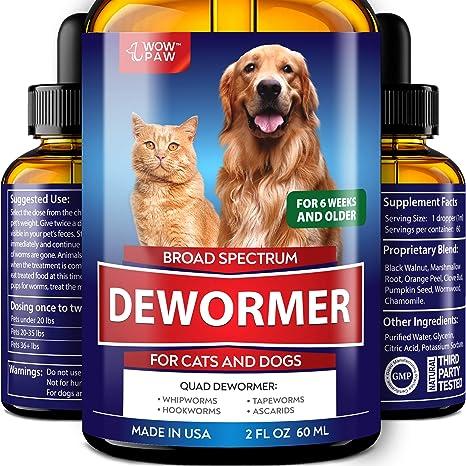 dewormed kitten