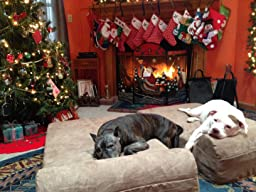 Cost Of Big Barker Dog Beds