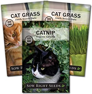 Sow Right Seeds - Catnip and Cat Grass Seed Collection for Planting Indoors or Outdoors, Includes The Popular herb Seed Catnip and Cat Grass (100% Sweet Oat Grass), Non-GMO Heirloom Seed, Wonderful G