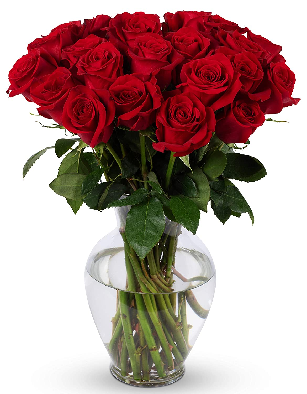 254 & Benchmark Bouquets 2 Dozen Red Roses With Vase (Fresh Cut Flowers)