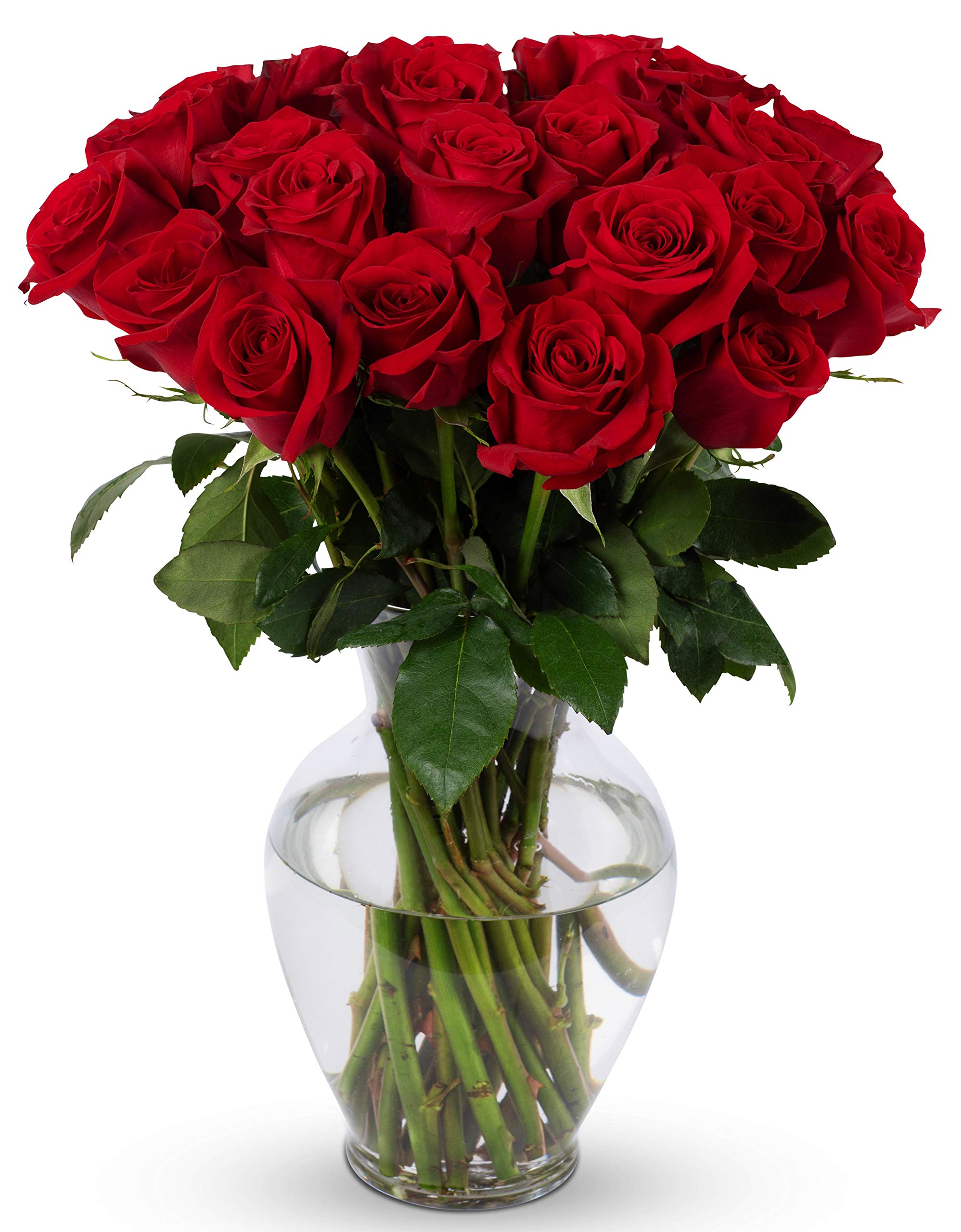 Amazon Com Benchmark Bouquets Signature Roses And