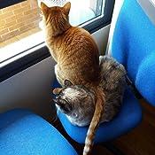 Un gato callejero llamado Bob (Autoayuda) eBook: James Bowen, Paz Pruneda: Amazon.es