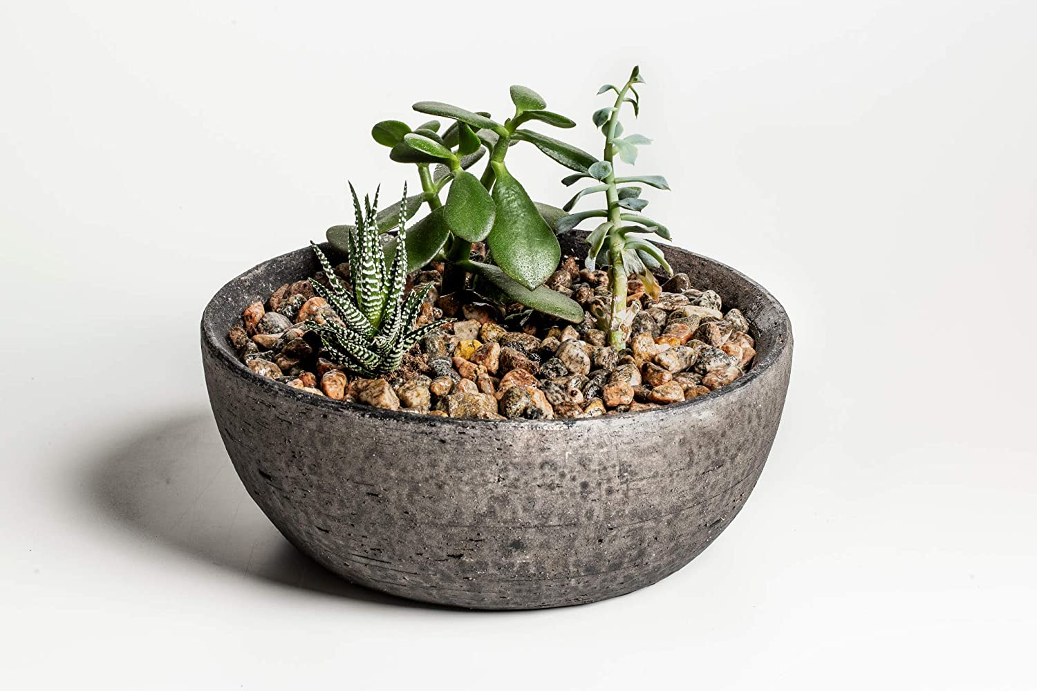 How To Care For A Resurrection Plant
