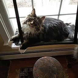Amazon Com David City Cat Window Perch Cat Window Hammock Cat Hammock Quality Upgrades Saving Space Carrying 35 Pounds Allowing Your Cat To Enjoy 360 Degree Sunbathing Pet Supplies