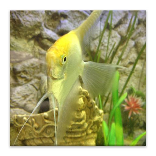 Aquarium fish information appstore for android for Amazon aquarium fish