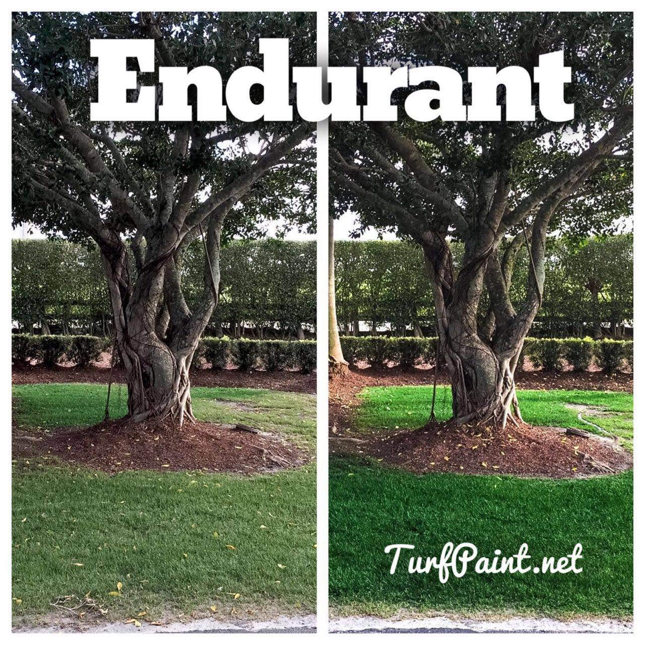 Concentrated Turf and Grass Colorant - 1 Gallon Jug Revitalizes Approximately 10,000 Sq. Ft of Dormant, Drought-Stricken or Patchy Lawn (Premium) by   Endurant (Image #3)