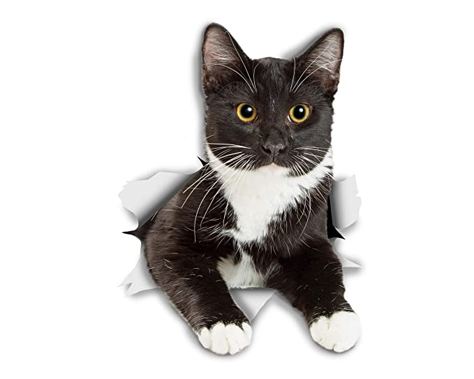 Amazon.com: Winston & Bear 3D Cat Stickers - 2 Pack - Resting Tuxedo Kitty Cat Decals for Wall - Stickers for Bedroom - Fridge - Toilet - Room - Retail ...