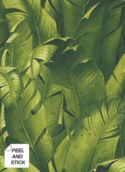 Verde Papel pintado NextWall Tropical Pl/átano Hojas de Pl/átano