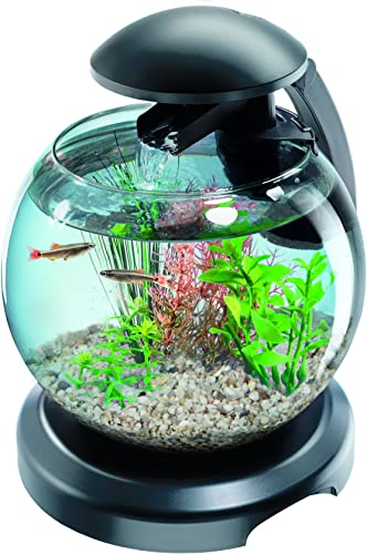 Tetra-Aquarium-Betta-Cascade-Globe