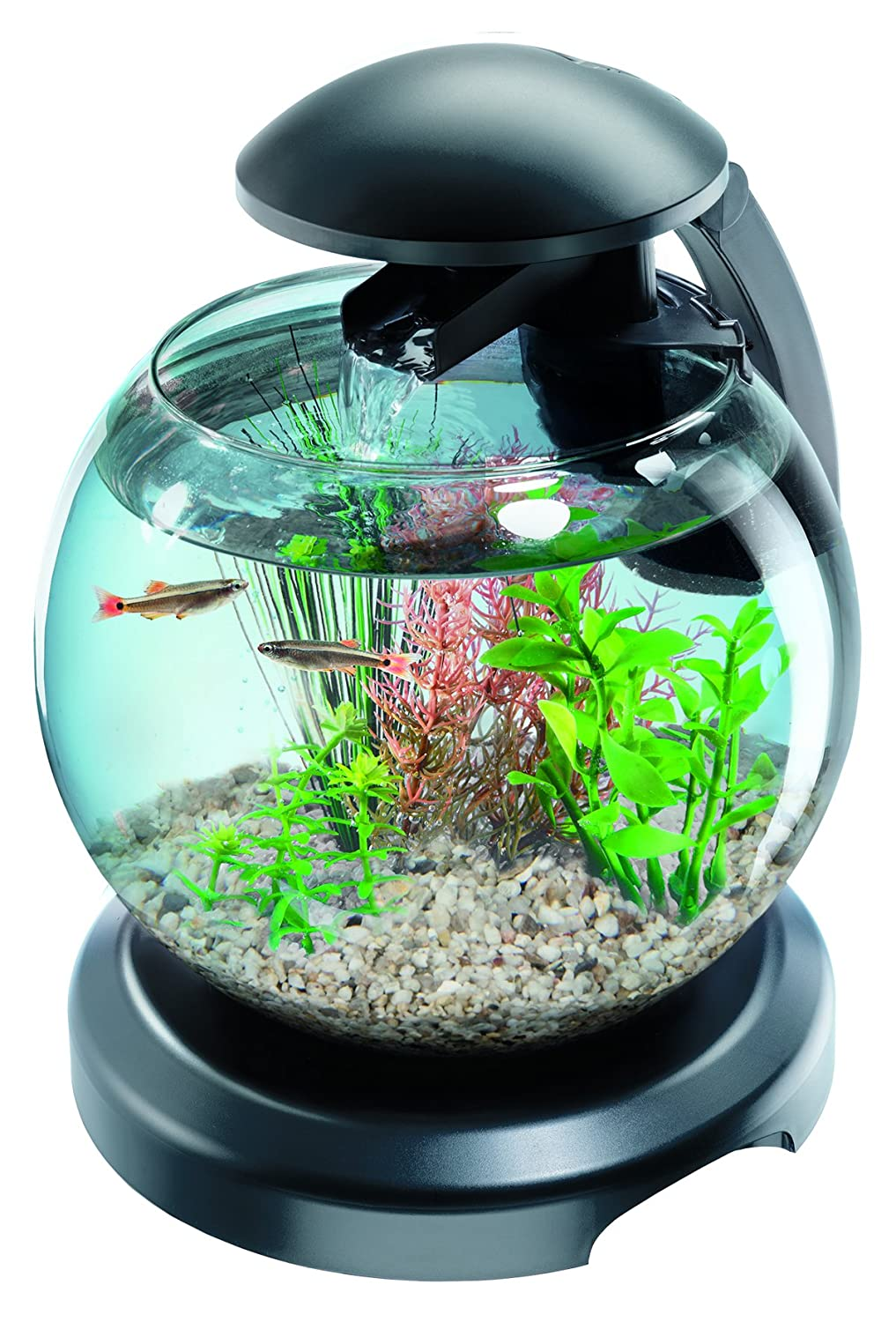 Elegant aquarium boule pas cher id es de conception de for Petit aquarium boule