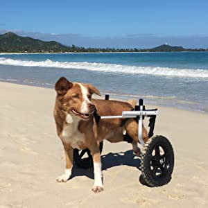 Amazon com: Walkin' Wheels Dog Wheelchair - for Large Dogs