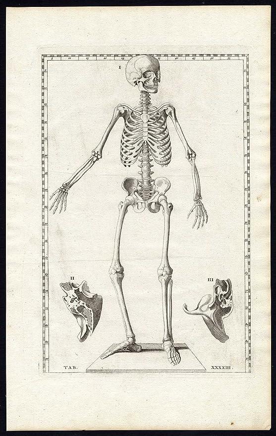 En la parte superior del ThePrintsCollector 6 Prints-anatomía ...