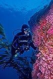 O'Neill Men's Dive Sector 5mm Back Zip Full