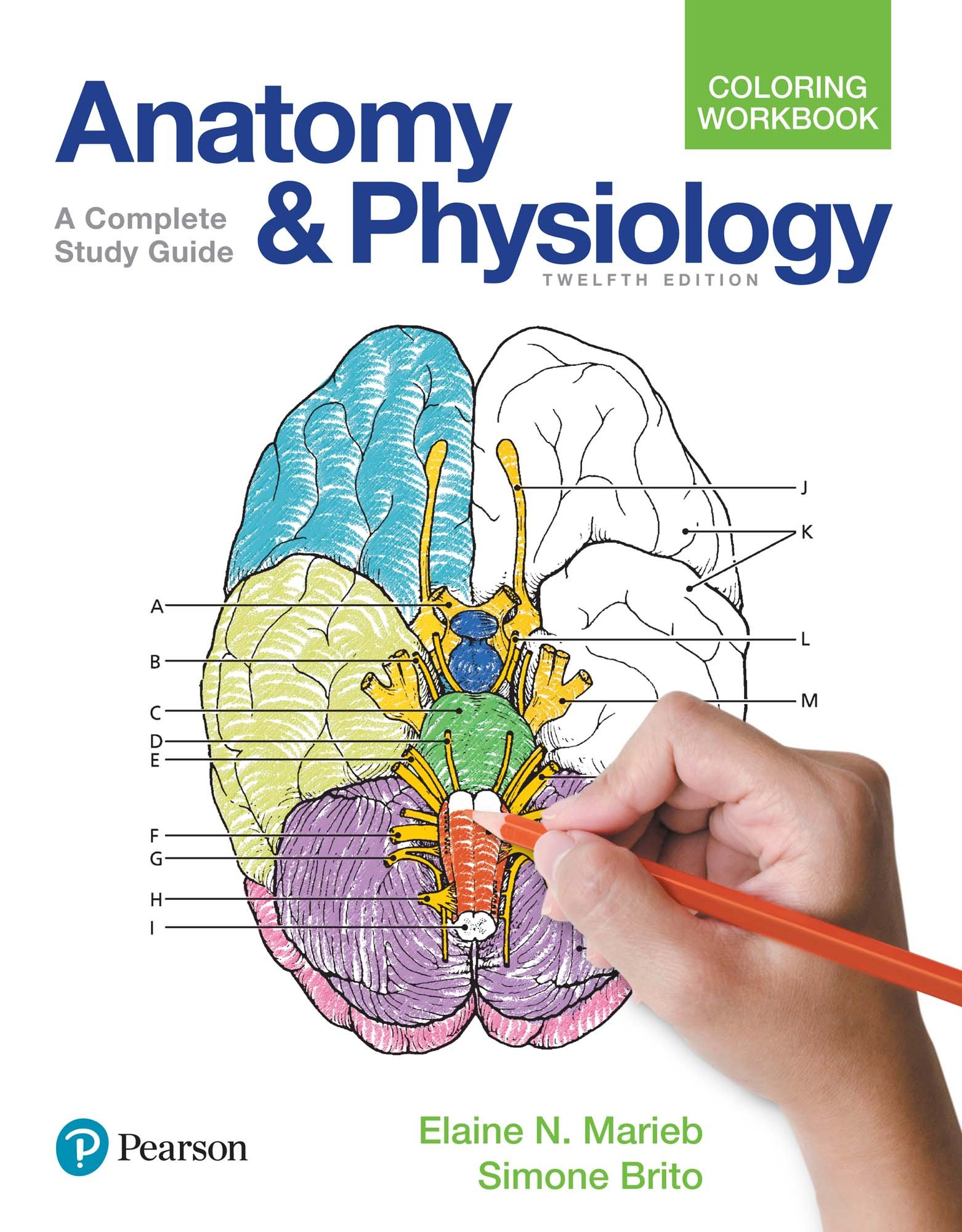 - Anatomy And Physiology Coloring Workbook (2-downloads) 12, N