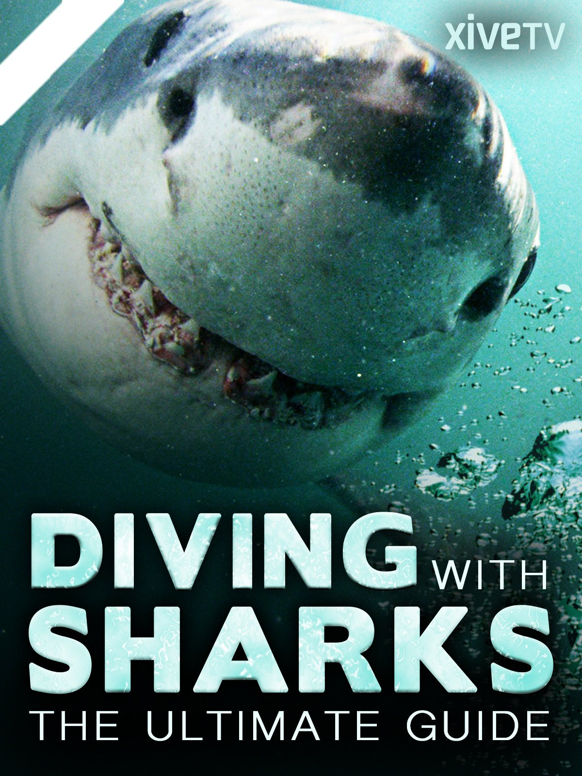 Diving with Sharks: the Ultimate Guide