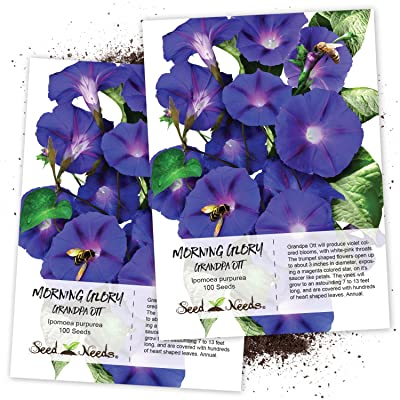 Seed Needs, Grandpa OTT Morning Glory (Ipomea purpurea) Twin Pack of 100 Seeds Each: Toys & Games