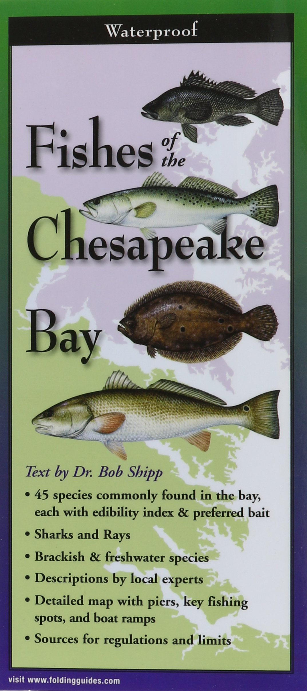 Fishes of the Chesapeake Bay: Folding Guide (Foldingguides) pdf