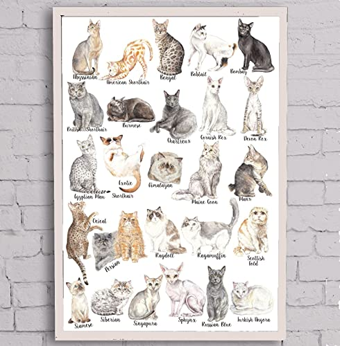 Amazon Com Cat Breeds Poster Watercolor Handmade