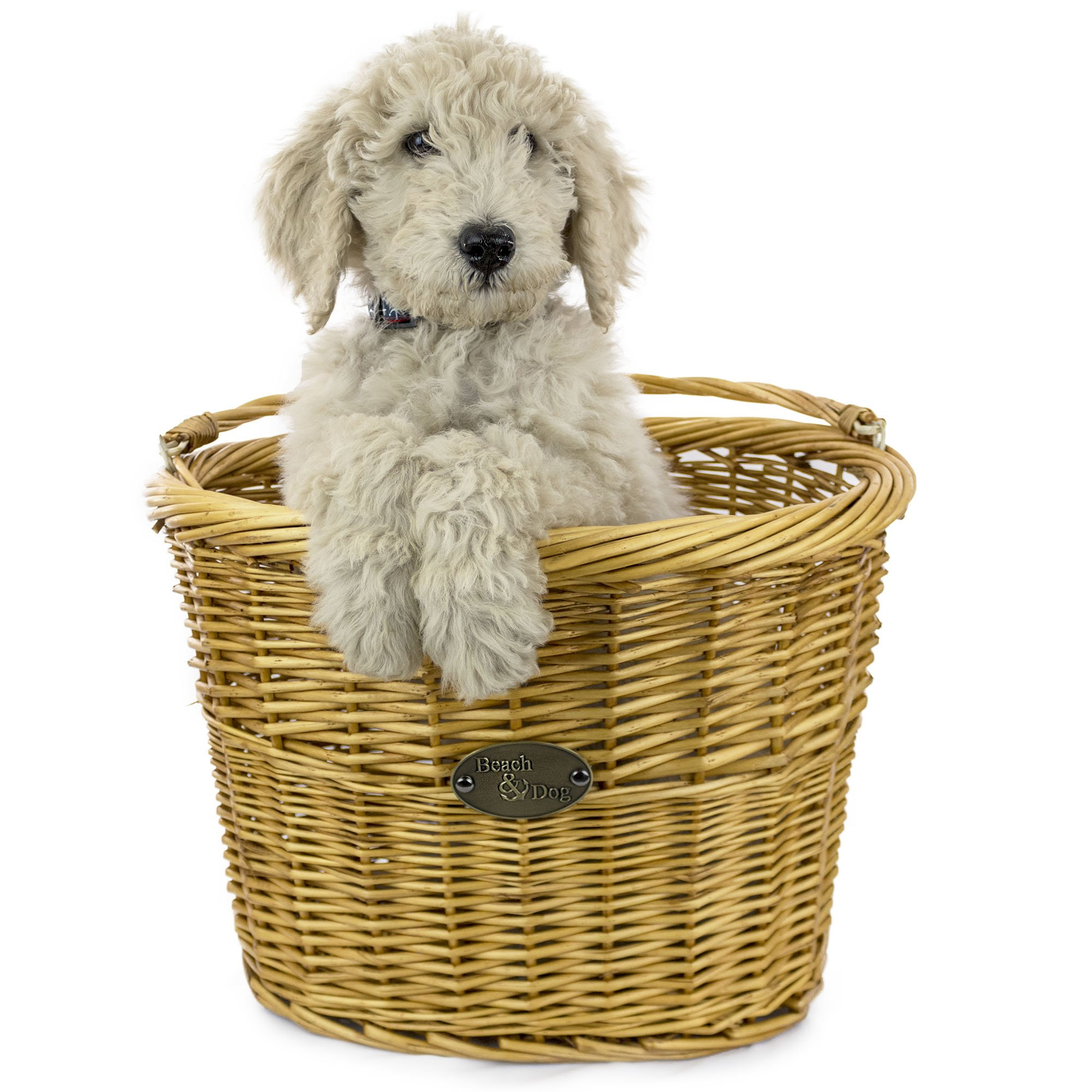 Large Willow Bicycle Basket for Dogs - Hand Crafted By Beach and Dog Co - Handlebar Bracket and Leashes Included (Monterey Large)
