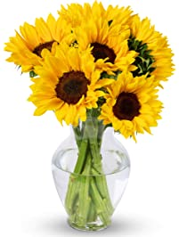 Benchmark Bouquets Yellow Sunflowers, With Vase (Fresh Cut Flowers)