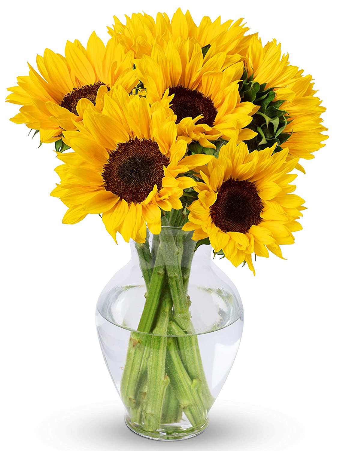 260 & Benchmark Bouquets Yellow Sunflowers With Vase (Fresh Cut Flowers)