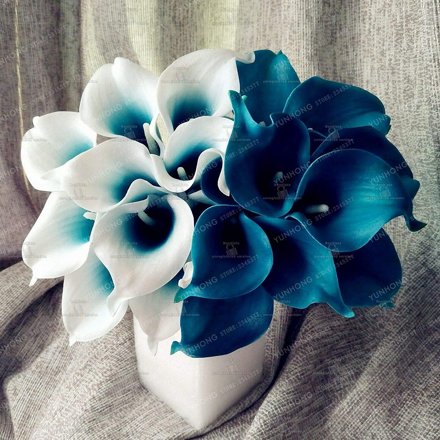 Royal Blue Calla Lily