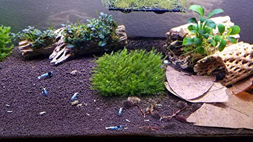 driftwood-for-aquarium