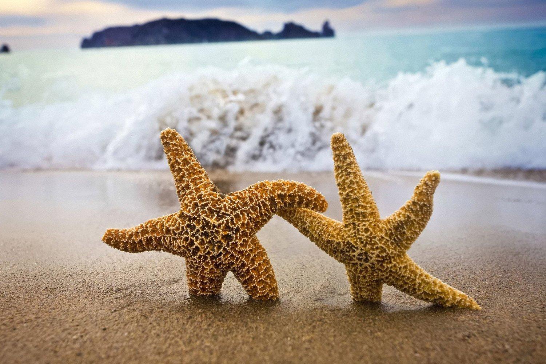 CHOIS Custom Film CF3020 Animal Starfish Sea star Beach Glass Window Frosted DIY 3' W by 2' H