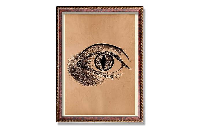 Amazon Vintage Anatomy Print Eye Poster Human Anatomy Print