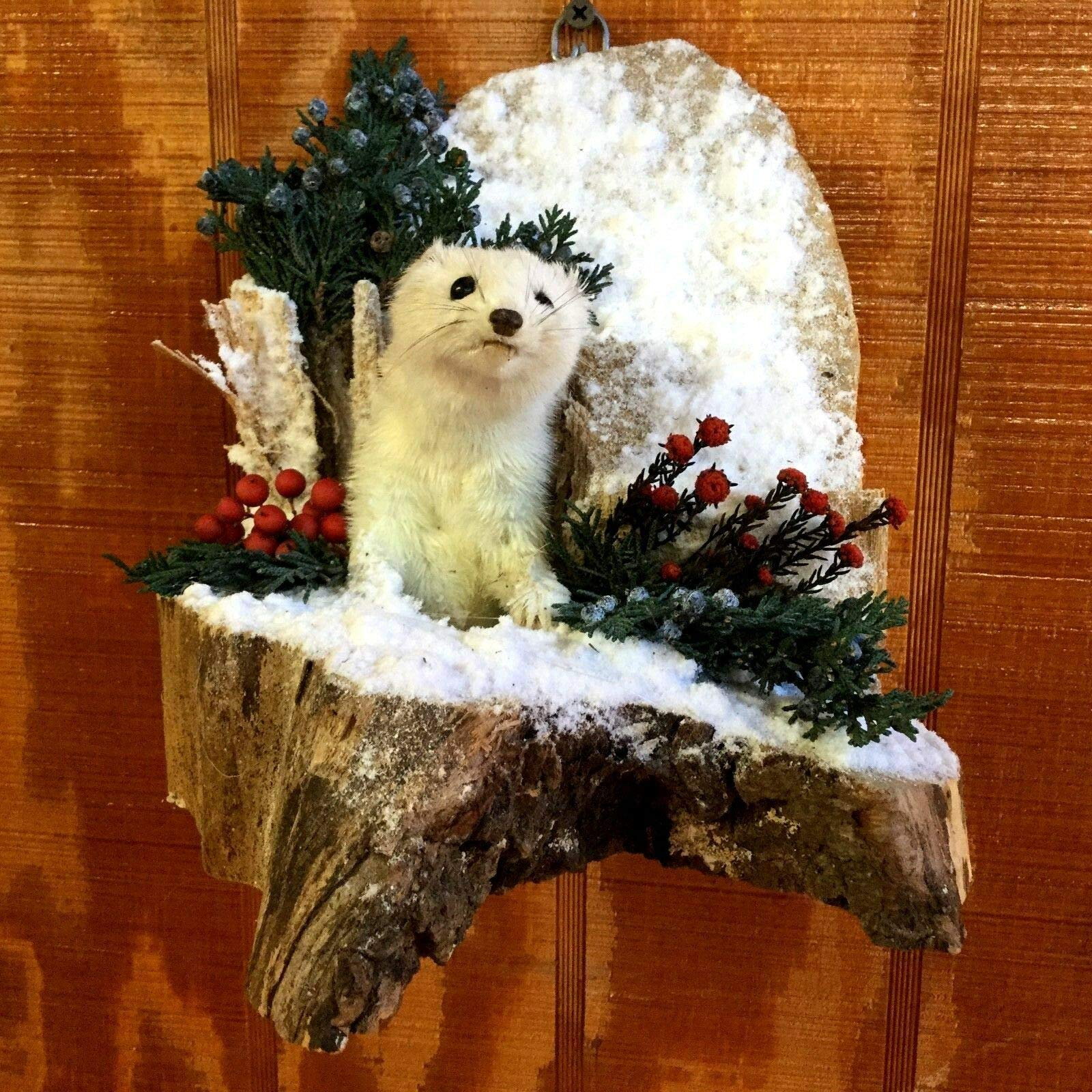 Real Taxidermy Stoat Ermine Weasel On A Log Display Collectible