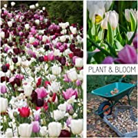 Plant & Bloom - Bulbos de flores